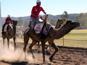 Alice Springs Camel Cup, www.visitedplanet.com
