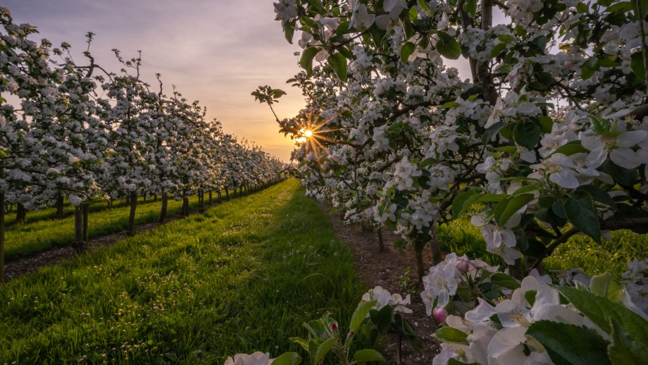 The best places to go apple and pear picking in orchards during autumn in The Netherlands | Visiting The Dutch Countryside | Explore The Netherlands beyond the crowds 4