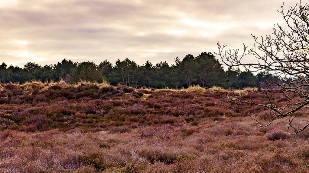 national parks to visit Netherlands, Noord Holland Schoorl