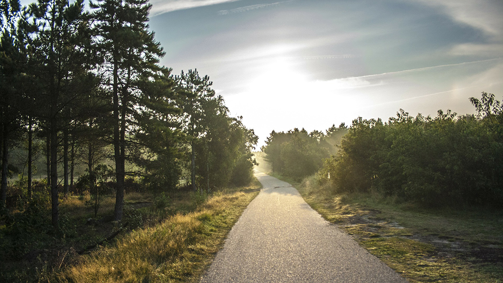 Best cycling routes on Ameland The Netherlands   Nature reserve Ameland to visit   Where to stay in Ameland The Netherlands
