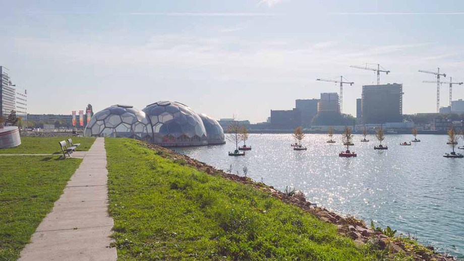 Rotterdam art installation 'bobbin forest' in the meuse river. Floating trees to discuss the connection of humans and nature.