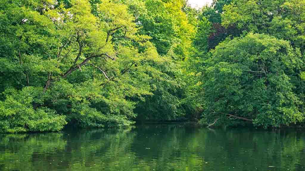 nature parks forests in city arnhem netherlands