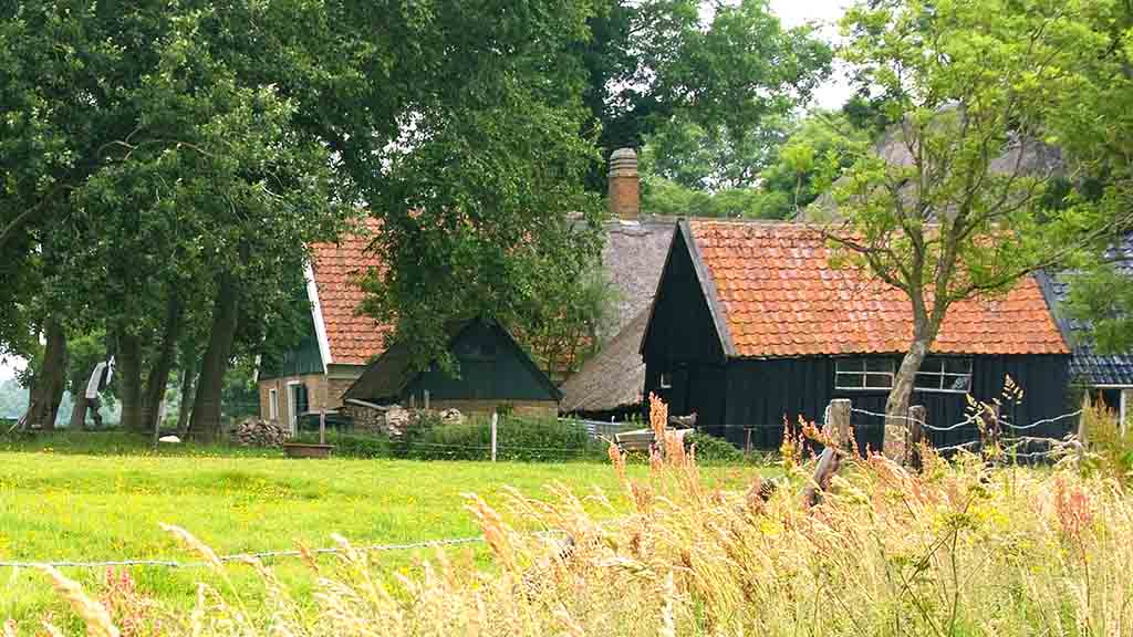 An old farm like on a classic painting. A cow and a pony are just biding their time.  Laundry is hanging to dry. The roof is covered with reed, seen on many old Dutch farms