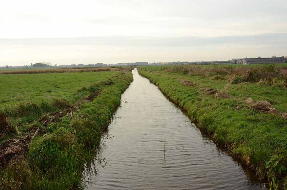Visiting this small canal and meadows in a nature reserve near the city of Willemstad (Noord/ North- Brabant), The Netherlands is one of the things to do