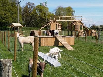 park hall oswestry goats