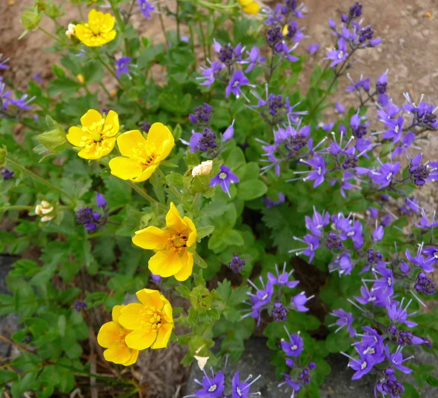 Bildergebnis für State Washington with beautiful flowers in September