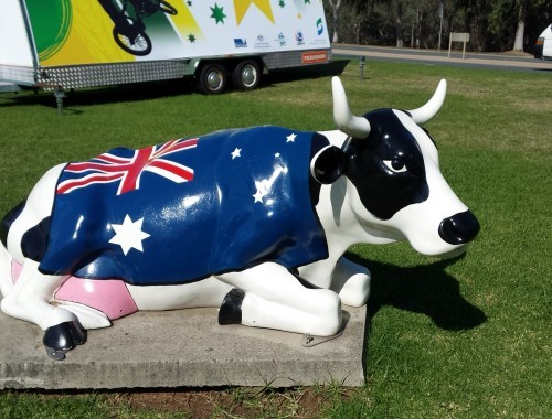 Aussie Flag Cow