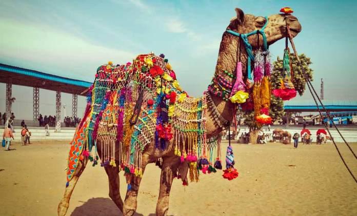 Pushkar Camel Fair, Pushkar