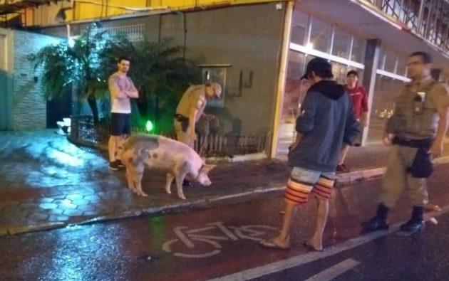 Porca solta mobiliza PM por cerca de uma hora em rua do Centro de Navegantes