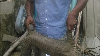 Photo of See something! Man caught a huge Crocodile at the back of his house [See photos]
