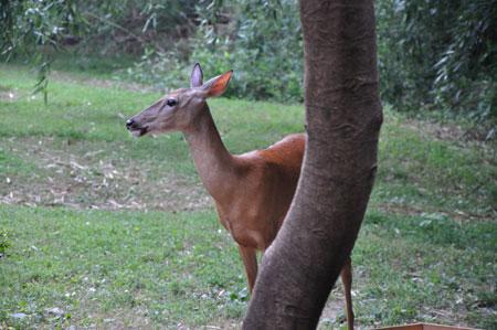 Ms. Deer