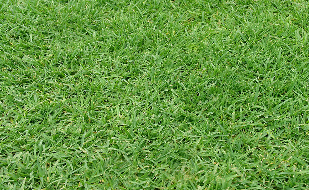 Windsor Green | Instant Lawn