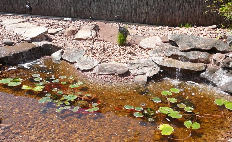 Fish Pond Ideas Small Gardens