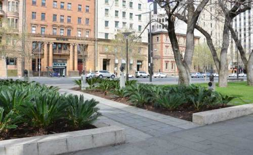 Landscaping Adelaide's North Terrace 5