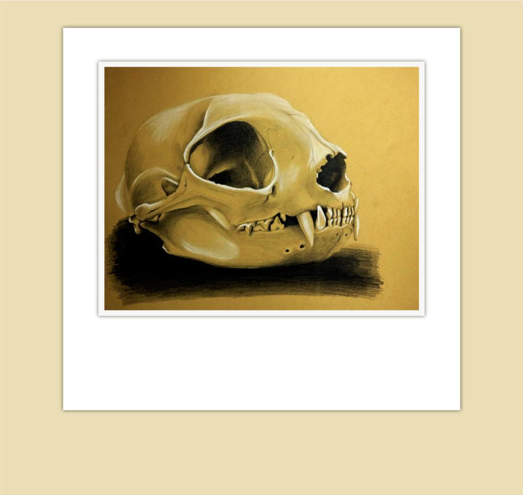 lynx skull