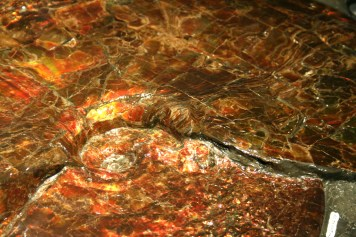 Ammonite front shell. Flickr Commons. User: mynameisgeebs. http://tinyurl.com/zjmthyb