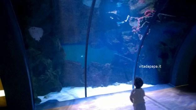acquario civico milano razza