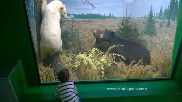Museo di storia naturale milano bambini animali (1)