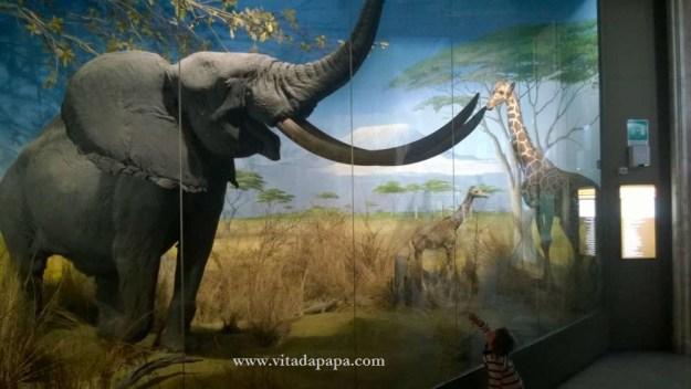 Museo di storia naturale milano bambini animali (11)