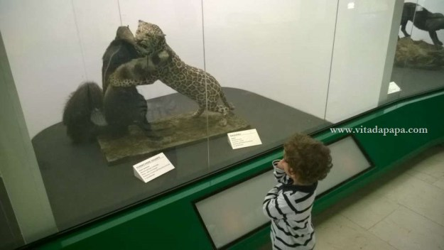 Museo di storia naturale milano bambini animali (3)