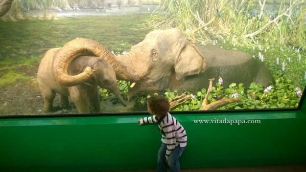 Museo di storia naturale milano bambini animali (4)