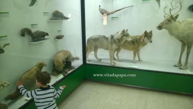 Museo di storia naturale milano bambini animali (6)