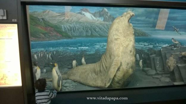 Museo di storia naturale milano bambini animali (9)