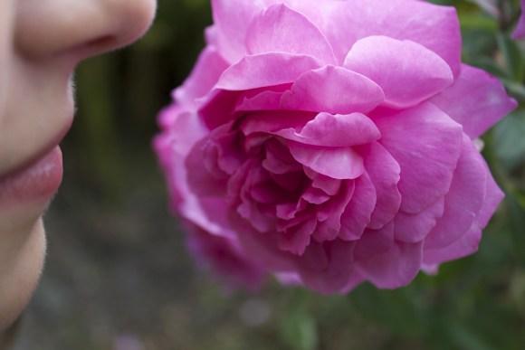 bocca di rosa fidanzata di tutti