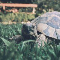 Terrari e case rifugio per tartarughe di terra