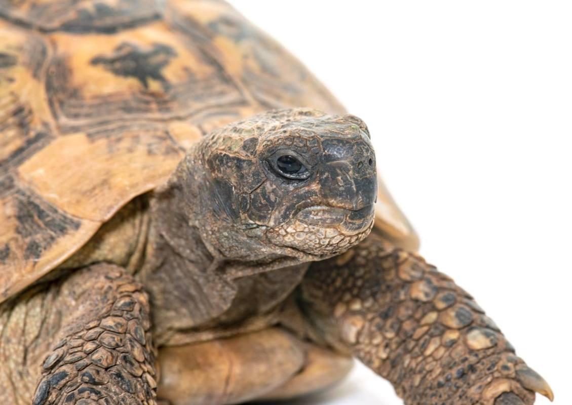 tartarughe si affezionano