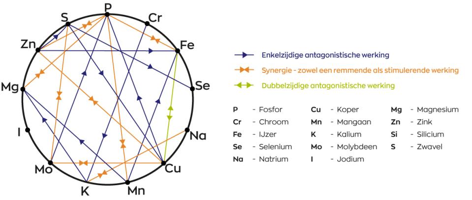Mineralen interactie