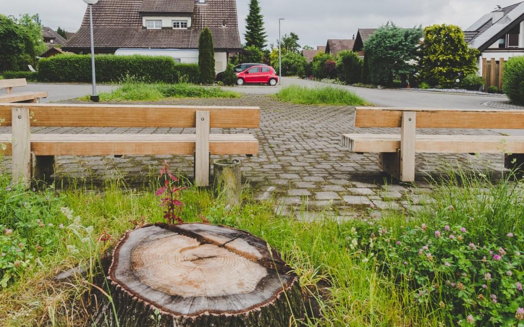 Illegale Baumfällung in Steinach – Schadensersatzberechnung
