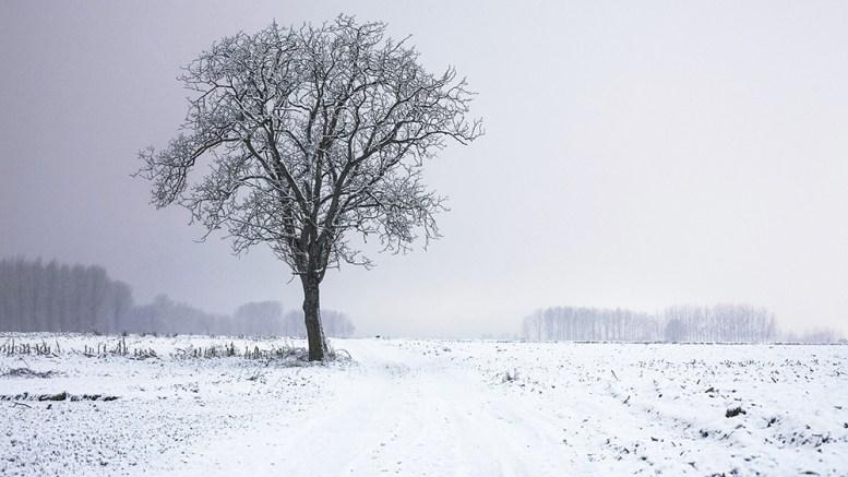 cold-snow-landscape-nature