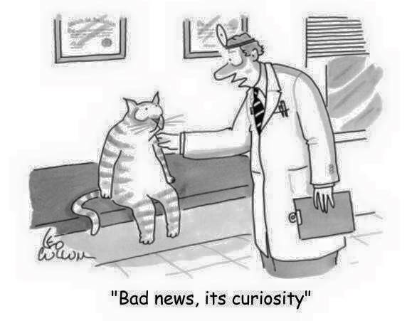 Funny bone - curiosity killed the cat