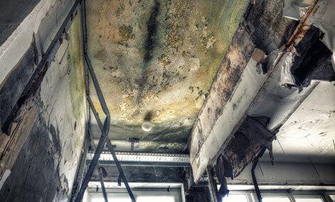 mold-damage-home