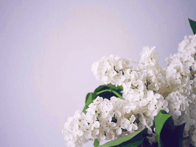 Top 6 Great Health Benefits Of Flowers 1