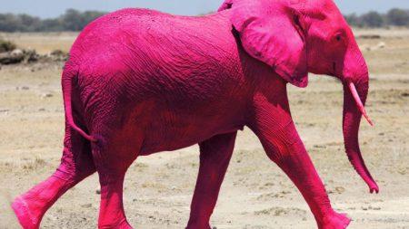 presenteisme, het roze verzuim