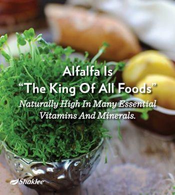 alfafa raja segala makanan