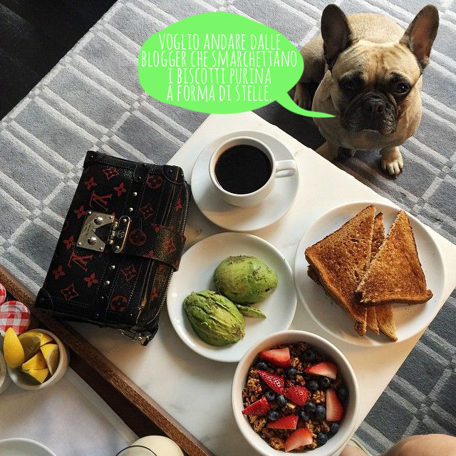 cane con colazione