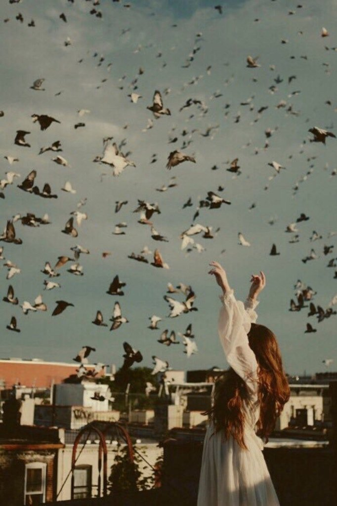 amori estivi uccelli