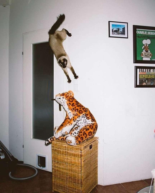 gatti volanti