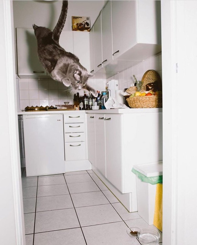 felino che plana in cucina