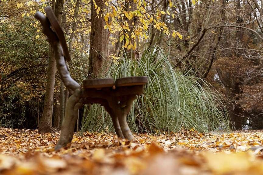 Panchina nel bosco in autunno