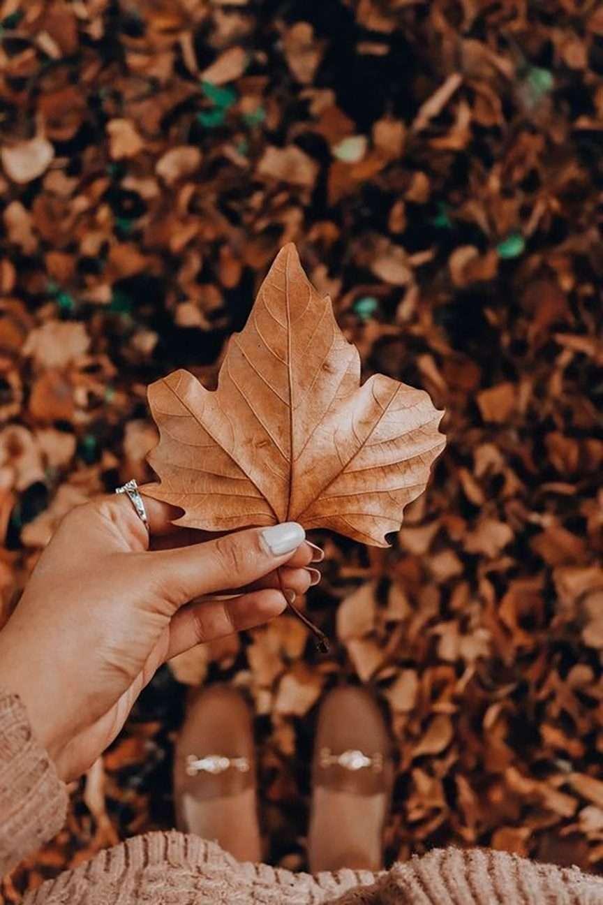 Il foliage e i colori dell'autunno