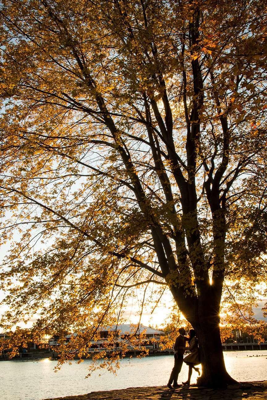 Baciarsi sotto un albero in autunno