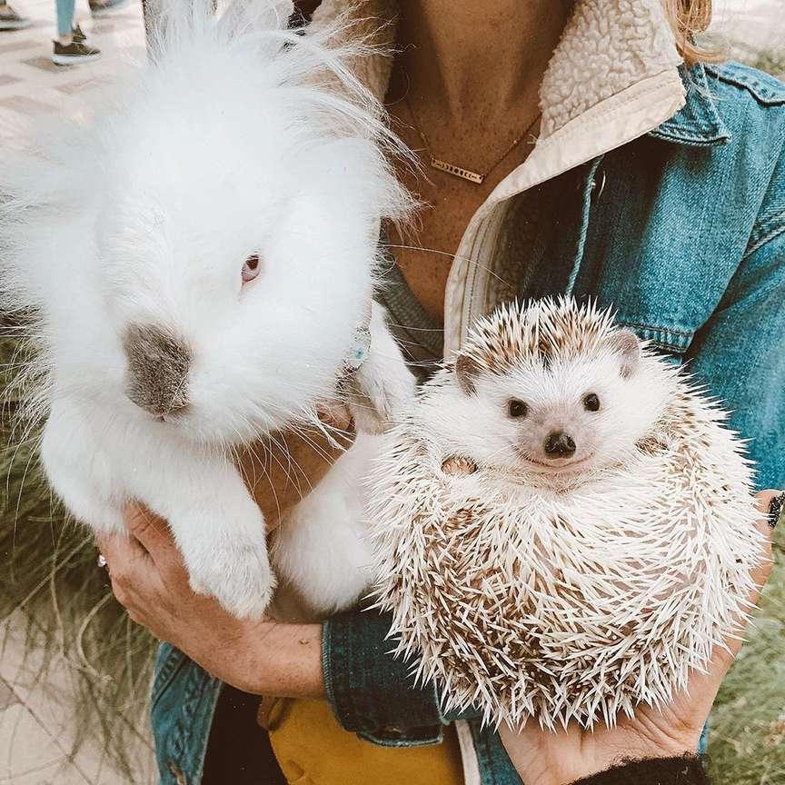 animali simpatici