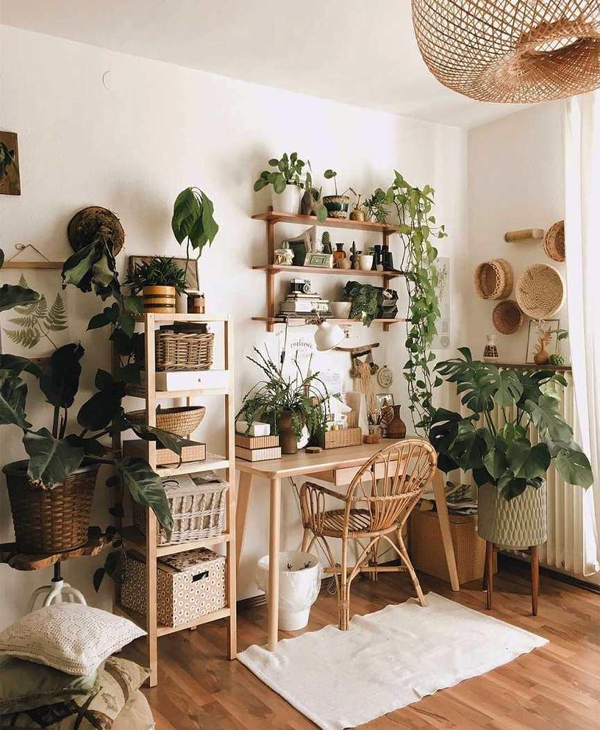 piante verdi nello studio