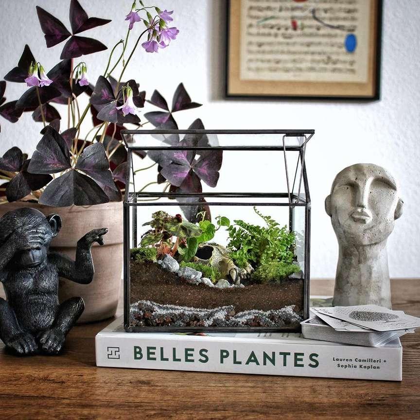 piante appartamento decorative
