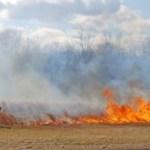 Usina é multada após queimada