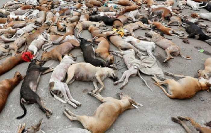 5 estão envolvidos diretamente com morte de cães em Igaracy
